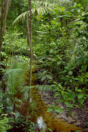 Amazon tree and vegetation whit water stream                 photo