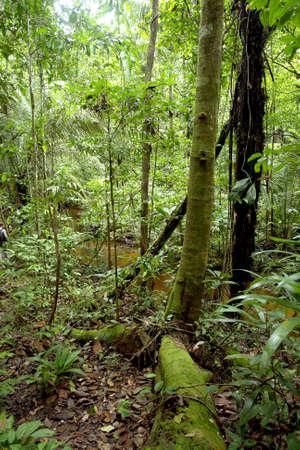 Amazon trees and vegetation natural pattern                                        photo