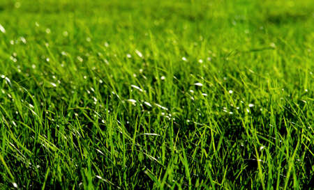 Macro shot of a fresh green grass in a meadow