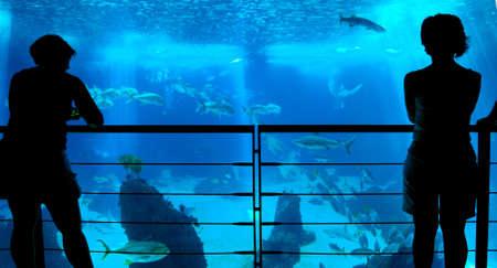 People silhouettes in aquarium background, Lisbon oceanarium, Portugal