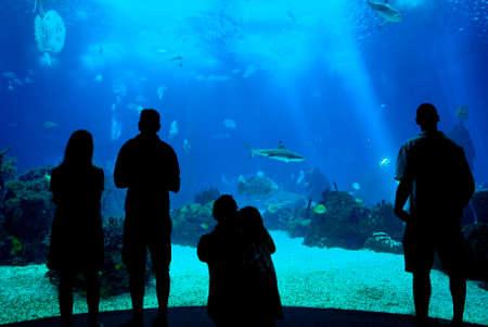 oceanarium: People silhouettes in aquarium background, Lisbon oceanarium, Portugal Editorial