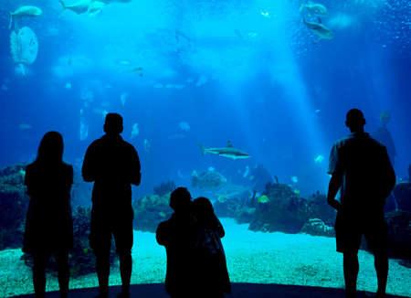 La gente siluetas en el fondo del acuario, Oceanario de Lisboa, Portugal Editorial