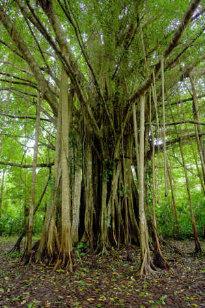 アマゾンのジャングルのシュールなエキゾチックな木