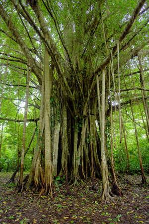 Selva amaz�nica ex�tico �rbol surrealista