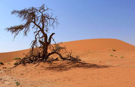 vlei: Sossusvlei sand dunes landscape in the Nanib desert near Sesriem, Namibia  Stock Photo