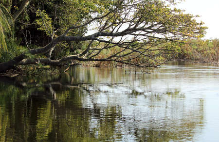 Okavango Delta agua y Cyperus papiro planta paisaje del norte de Botswana
