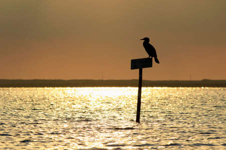 region of algarve: Bird silhouette in Ria Formosa natural conservation park, Algarve. Portugal Stock Photo