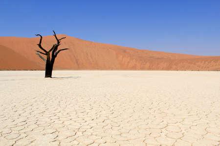 vast: Sossusvlei dead valley landscape in the Nanib desert near Sesriem, Namibia