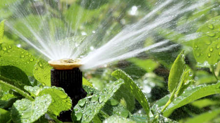 Automatic Garden Irrigation Spray system watering flowerbed Stock Photo