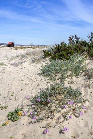 Ria Formosa humedales de conservaci�n natural de la regi�n paisaje Vista de Armona playa costo una de las islas. Algarve al sur de Portugal.