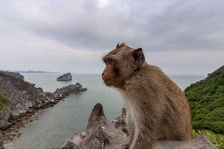 Monkey in mount top of  island beach scenario Lan Ha bay, landmark destination, Cat Ba islands (South of Halong bay), Vietnam.