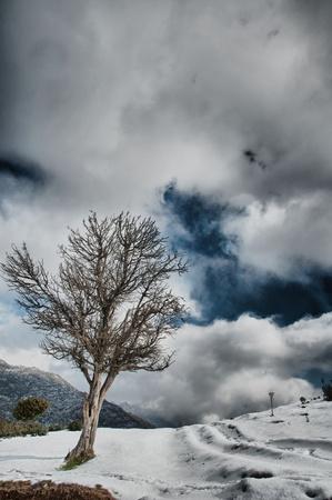 the spirit of the tree Stock Photo