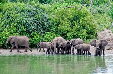 the lagoon of elephants. botswana
