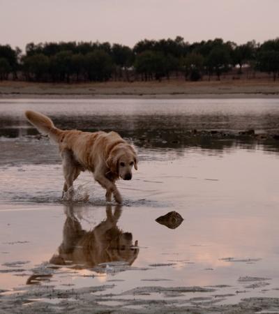 yako reflection of the water in the santillana reservoir. manzanares el real, madrid
