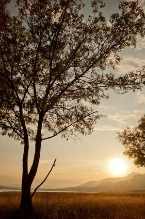 sunset through the trees. manzanares el real, madrid Stock Photo