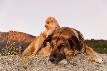 leisurely: pair of dogs lounging while leisurely sunbathing