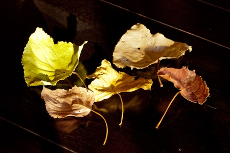 autumn leaves 5 ​​different colors and dry on teak.