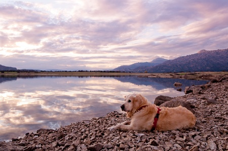 dog lying and relaxing on the shore of a lake, enjoying a beautiful sunset Stock Photo