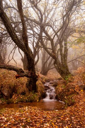 small stream in the woods, covered in heavy fog on an autumn day.