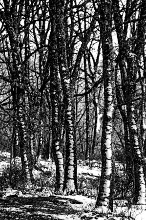 Trunks covered by snow in a rural landscape a cold winter day - Vertical  black and white  photo