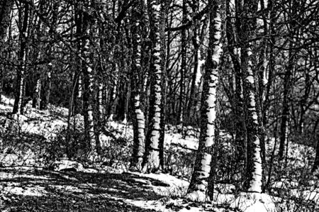 Trunks covered by snow in a rural landscape a cold winter day - Horizontal  black and white  Stock Photo - 17465978