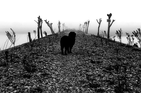 Dog amid cobblestone road flanked by tree trunks in heavy fog Stock Photo