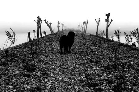 Dog amid cobblestone road flanked by tree trunks in heavy fog Stock Photo - 17490621