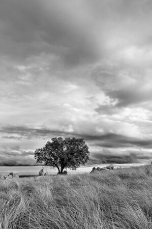 Tree soltary on the covered hill of grass in a cloudy day - White and black