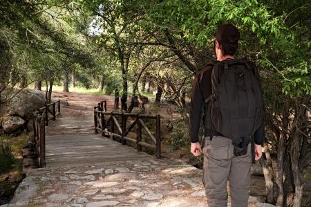 sun s: L'uomo cammina attraverso il ponte della foresta con lo zaino sotto i raggi del sole s che passa attraverso gli alberi Archivio Fotografico