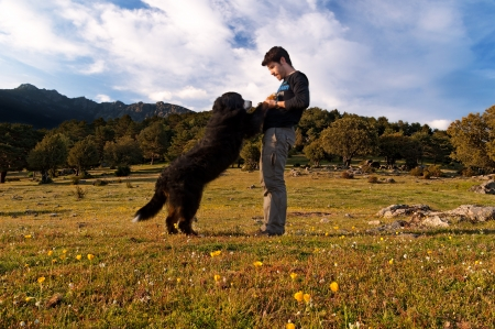 Young boy train your dog in the field one sunny spring afternoon  photo