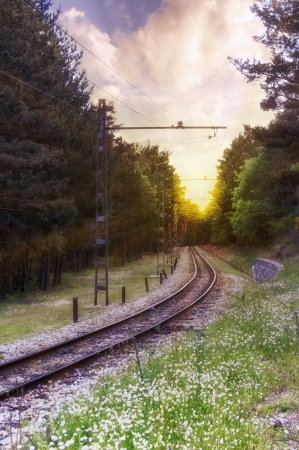 Landscape the railway soaring through the forest in a beautiful sunset  photo