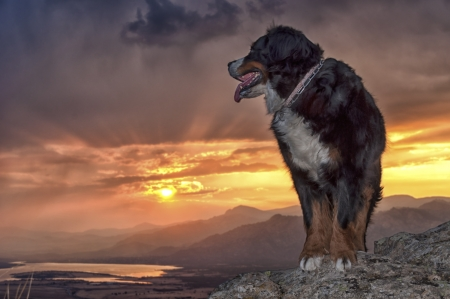 Dog at the top of a mountain in a beautiful sunset  photo