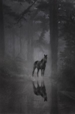 Mysterious black horse in the forest in heavy rain and fog photo