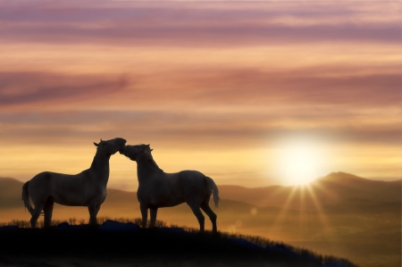 Couple stroking horse on top of a hill in a beautiful summer sunset  photo
