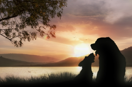 Couple of dogs on the grass watching a beautiful sunset on the lake