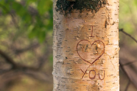 bark carving: Symbol of love engraved on a tree in the forest at sunset Stock Photo
