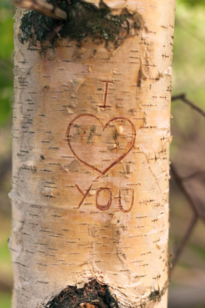 Symbol of love engraved on a tree in the forest at sunset Stock Photo