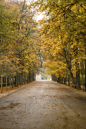 Man walking in the rain in the park one autumn day