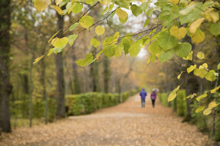 Couple walking in the rain in the park one autumn day Stock Photo