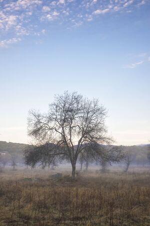 Morning on the field with fog and tree silhouette Stock Photo