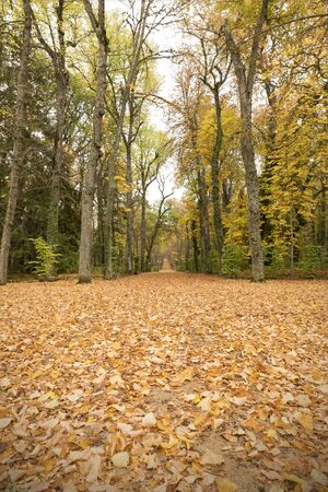 Path in the autumn forest on a rainy day Stock Photo