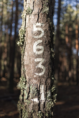 Numbers painted on the old tree trunk, enlightened by sun.