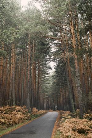 Mountain road through a forest on a rainy autumn day.