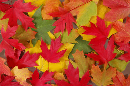 crimson colour: Colorful fall leaves of various trees