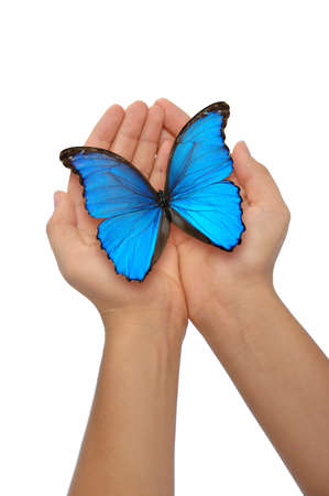 blue butterfly: Hands holding a blue butterfly against a white background