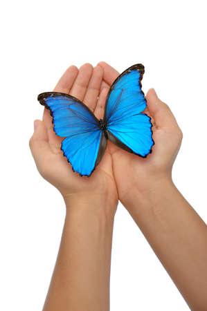 donna farfalla: Mani detiene una farfalla blu su sfondo bianco