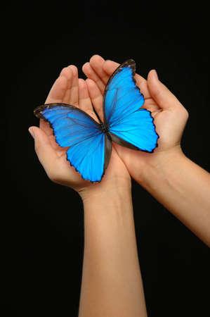 donna farfalla: Mani detiene una farfalla blu su sfondo scuro Archivio Fotografico