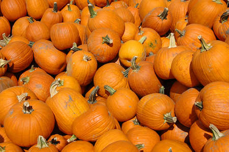 Pumkins on a pile Stock Photo - 7773543