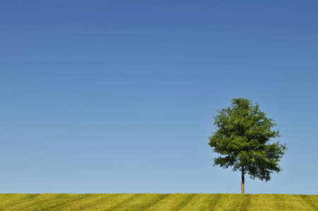 countryside landscape: Landscape with tree, grass and blue sky