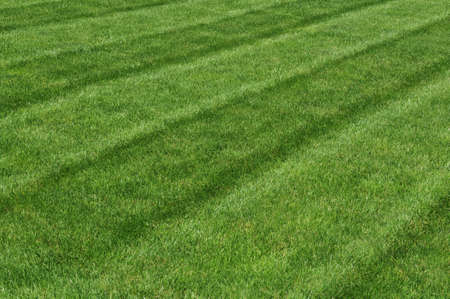 cut grass: Grass view freshly cut on the back yard on a sunny day Stock Photo